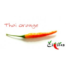Thai Orange (10 semen)
