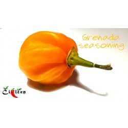 Grenada Seasoning (10 semena)