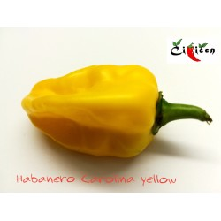 Habanero Carolina Yellow (10 semen)