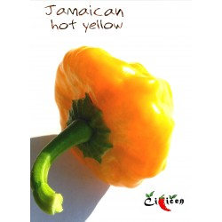 Jamaican Hot Yellow (10 semen)